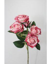 """25"""" SWEETEART ROSE BUSH"""