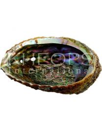 "ABALONE SHELL 4""- 6.5"" ASSORTED SIZE"