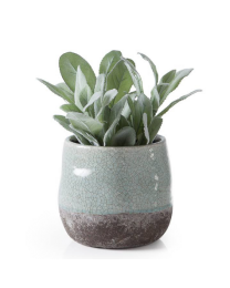 "Corsica Ceramic Crackle 2 Tone 4"" Round Pot - Celadon Blue"