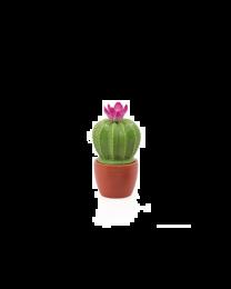 Flowering Cactus Decor Mini Canister - Fuchsia