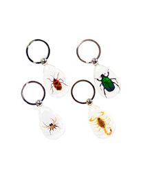 Keychain- Insect, assorted 12