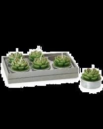 Succulent Round Echeveria Tealights Set of Six