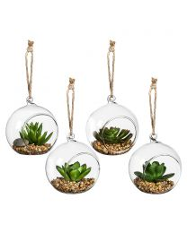 Succulents in Globe