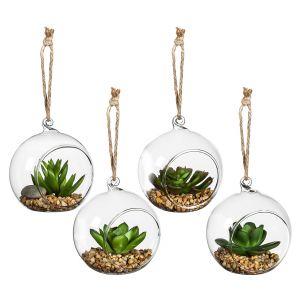 Succulents in Globe