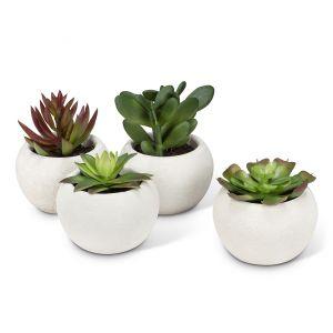 Succulents in Round Pot