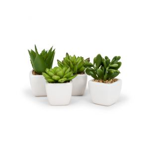 Succulents in Tapered Pot